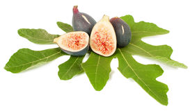 Fig fruits. Ripe fresh purple fig fruits and leaf on white background Stock Photos