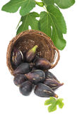 Fig fruits and branch Stock Photography