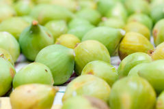 Fig harvesting Royalty Free Stock Photo