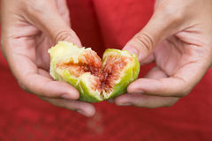 Fig heart in hands. Woman hands with red dress opening a green ripe fig Stock Photo