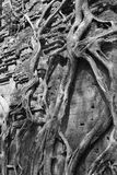 Fig. het wurgen tempel Stock Afbeeldingen