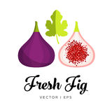 Fig   image. Fresh Fig and leaf   image Stock Images