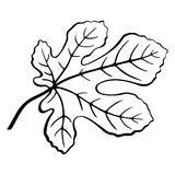 Fig Leaf Black Pictogram. Fig Tree Leaf Black Pictogram, Outline Contour Pictogram Isolated on White Background. Vector Stock Photography