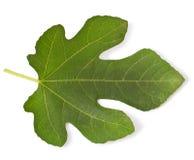 Fig leaf. On white Stock Image