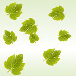 Fig leaves background Stock Photography