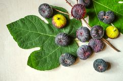 Fig leaves with ripe dark purple figs and a dry twig Royalty Free Stock Photography