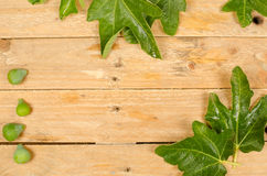 Fig leaves Royalty Free Stock Photos