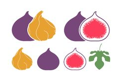 Fig logo. Isolated fig on white background. EPS 10. Vector illustration Royalty Free Stock Image