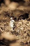 Fig Plantation Worker Royalty Free Stock Image