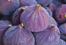 Black Fig Royalty Free Stock Photos