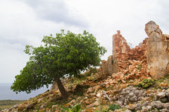 Fig and ruin Stock Photo