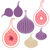 Fig. Set. Isolated objects on white background. Vector illustration (EPS 10 Royalty Free Stock Photos