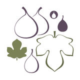 Fig. Set. Isolated objects on white background. Vector illustration (EPS 10 Royalty Free Stock Image