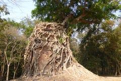 Fig strangling Hindu temple Stock Photo