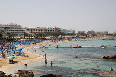 Fig tree bay Royalty Free Stock Image