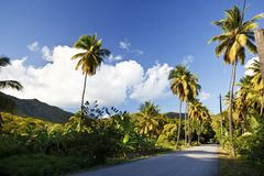 Fig Tree Drive, Antigua. A road called Fig Tree Drive in the centre of Antigua, a bit ironically because it features mostly coconut palm trees stock images