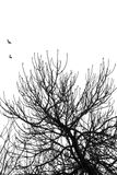 Fig tree flying birds Royalty Free Stock Images