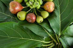 Fig tree,fruit Stock Photography