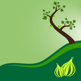 Fig tree with leaves and fruits. Vector illustration Royalty Free Stock Photos