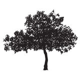 Fig tree silhouette Stock Images