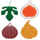 Fig. Vector illustration (EPS 10 Royalty Free Stock Images
