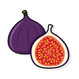 Fig on a white background. Fig sliced. fig illustration. fig vector. fig poster. fig vector illustration Royalty Free Stock Photography