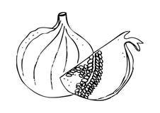 Figa i granatowiec Obrazy Royalty Free