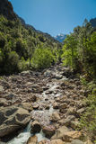 Figarella river running through Foret de Bonifatu in Corsica Royalty Free Stock Images