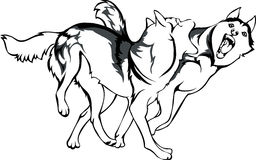 Fight of dogs. Vector drawing of fighting dogs Royalty Free Stock Photos