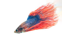 Free FIGHT FISH Royalty Free Stock Photos - 46516348