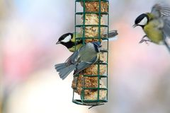 Fight for food at lard feeder Royalty Free Stock Photography