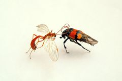 Fight of insects. On white paper royalty free stock image