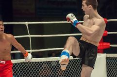 Fight in mixed martial arts Royalty Free Stock Photography