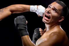 Fighter Getting Knocked Out Stock Images
