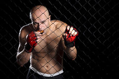 The Fighter. Mixed martial arts fighter in the cage Stock Images