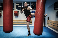 Fighter training with punching bag at gym Stock Images