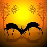Fighting Antelopes. Colored Background Illustration, Vector Stock Image