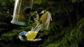 Fighting birds Royalty Free Stock Image