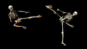 Fighting Bones. This is an skeleton in a fighting pose Stock Images
