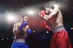 Fighting. Boxers fighting in boxing ring royalty free stock image
