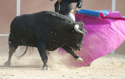 Fighting bull Royalty Free Stock Image