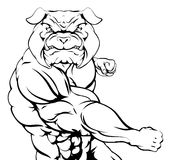 Fighting bulldog. Bulldog mascot character or sports mascot fighting punching with a fist Royalty Free Stock Photography