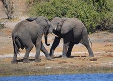Fighting elephants Stock Photos