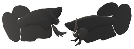 Fighting fish in 3D illustration. Fighting fish Beta sp. in 3D illustration, colored Asian fresh water aquarium fish Stock Images