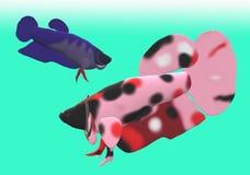 Fighting fish in 3D illustration. Fighting fish Beta sp. in 3D illustration, colored Asian fresh water aquarium fish Stock Photography