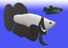 Fighting fish in 3D illustration. Fighting fish Beta sp. in 3D illustration, colored Asian fresh water aquarium fish Royalty Free Stock Photo