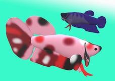Fighting fish in 3D illustration. Fighting fish Beta sp. in 3D illustration, colored Asian fresh water aquarium fish Royalty Free Stock Image