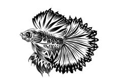 Fighting fish line-01. Hand drawn  fighting Fish with line elements in black and white doodle style. Pattern for coloring book Royalty Free Stock Images