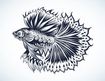 Fighting fish. Vector Tribal Decorative Fighting Fish in tattoo style on white background,hand drawn and sketch, Siamese fighting fish vector Stock Image