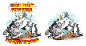 Fighting geese. Vector illustration of fighting geese competition Royalty Free Stock Photography